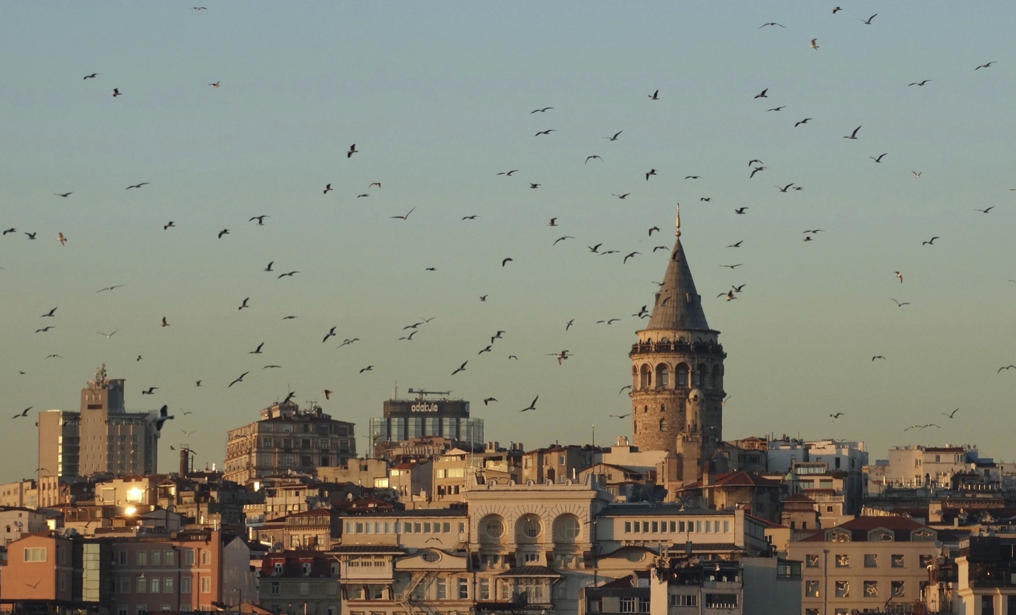 Galata Tower in Istanbul Surrounded by Seagulls