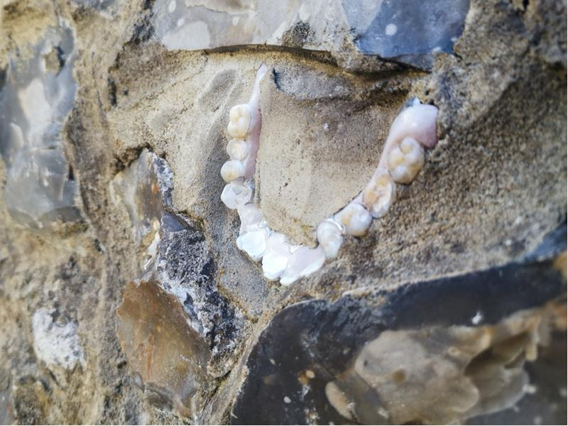 Dentures Embedded in a wall in Steyning